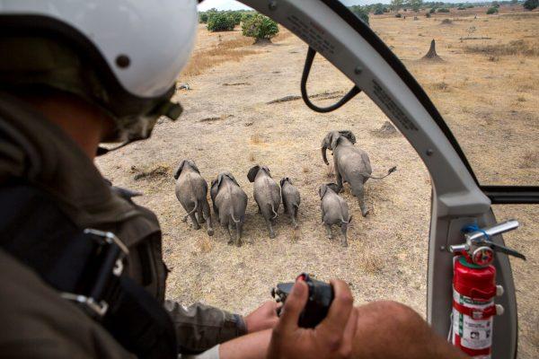 Elefantenumsiedlung Malawi